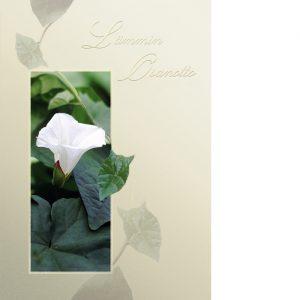 Kannessa kehys, jonka sisällä vihreä könnös ja sen keskellä valkoinen maljamainen kukka. Kannessa kultafolioitu teksti Lämmin osanotto.