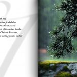 Aukeamalla Männynoksa sateella ja teksti Itkeä saa, kun sattuu ja ahdistaa. Selästä sieluun saakka kevenee silloin raskas taakka. Kyynel katseen kirkastaa, taivas valolla pyyntöön vastaa.