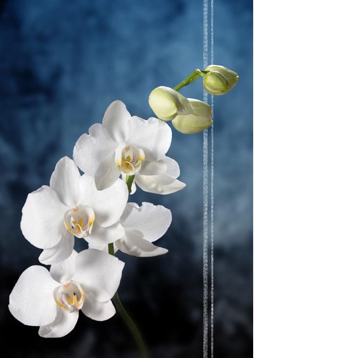 Sinitaustaisessa kannessa valkoisen orkidean oksa.